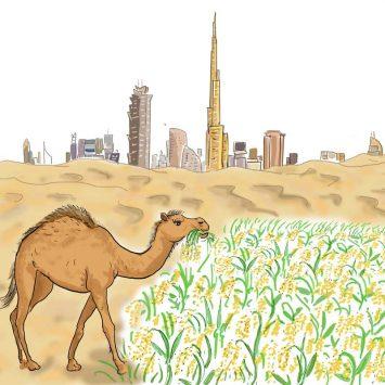 Wadi or paddy field?